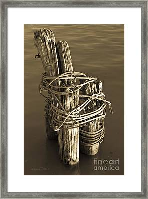 All Tied Up Framed Print by Gordon Wood