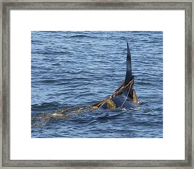 All Tied Up Framed Print