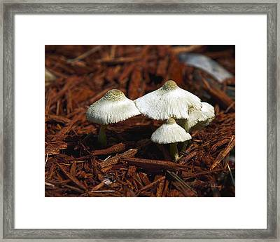 All Together Framed Print by Christopher Holmes