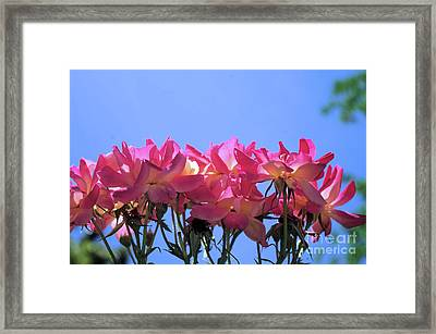 All Together Now Framed Print
