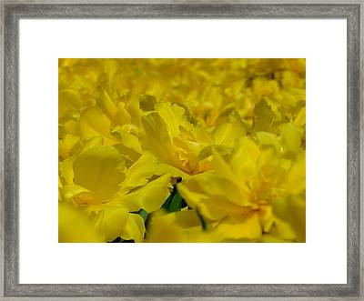 All Yellow Framed Print by Simona Stroescu