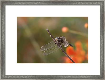 All You Birds 'n Bees Got Nothin' On Me Framed Print by Thorne Owenly