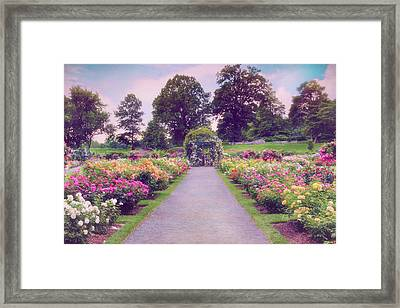 Allee Of Roses  Framed Print by Jessica Jenney