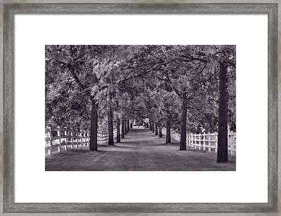 Allee Way Bw Framed Print