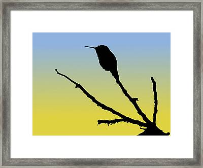 Allen's Hummingbird Silhouette At Sunrise Framed Print