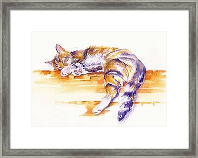 Alley Cat Framed Print by Debra Hall