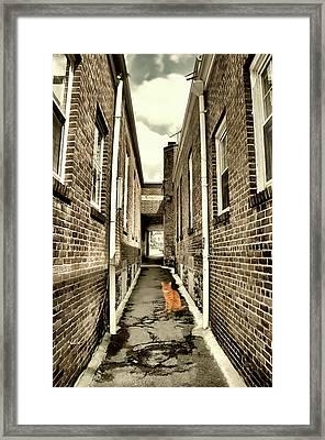 Alley Cat Framed Print