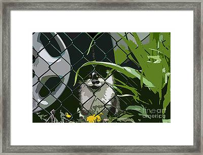 Alley Cat Framed Print by Reb Frost