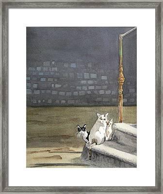 Alley Cats - Gatti Randaggi Framed Print