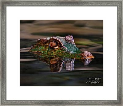 Alligator Above Water Reflection Framed Print by Loriannah Hespe