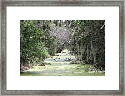 Alligator Alley Framed Print