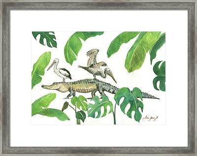 Alligator And Pelicans Framed Print by Juan Bosco