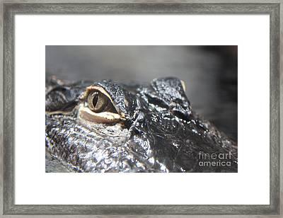 Alligator Eye Framed Print by Carol Groenen