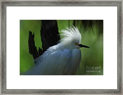 Framed Print featuring the photograph Alligator Farm Snowy Egret by Deborah Benoit