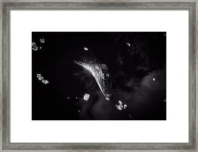 Alligator Float Framed Print