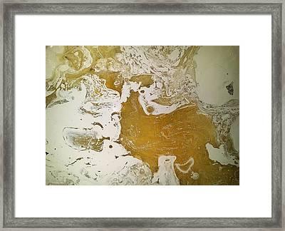 Alligator Head Amber Backflip Framed Print by Gyula Julian Lovas