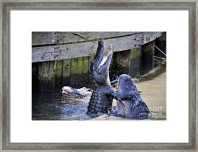 Alligator Hugs Framed Print