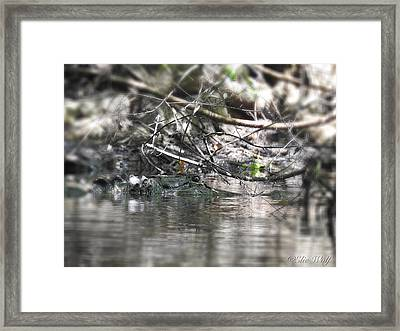 Alligator In Silver Framed Print