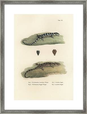 Alligator Lizards Framed Print