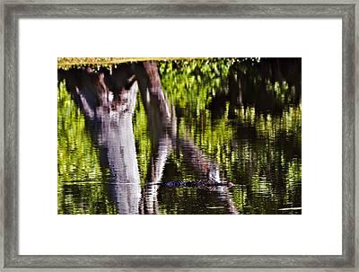 Alligator Framed Print by Michael Whitaker