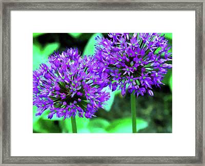 Allium Bulbs Framed Print by Allen Beatty