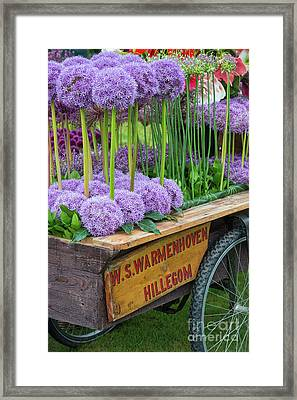 Allium Cart Framed Print