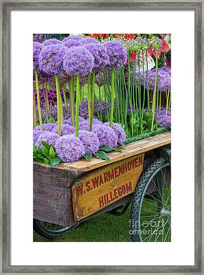 Allium Cart Framed Print by Tim Gainey