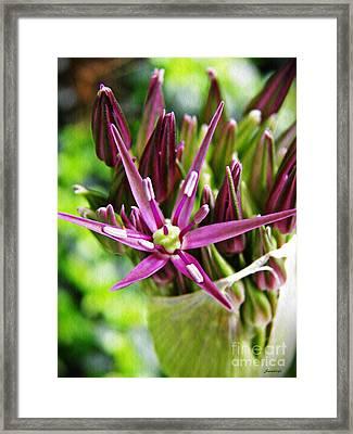 Allium Macro 1                     Framed Print by Sarah Loft