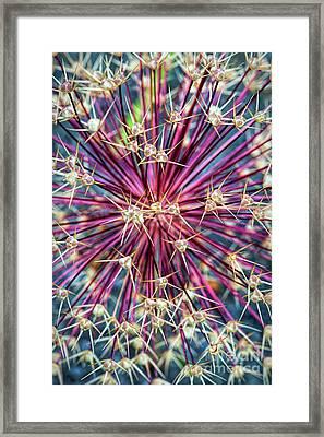 Allium Stars Framed Print by Tim Gainey