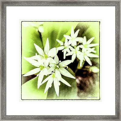 Allium Ursinum 2 Framed Print