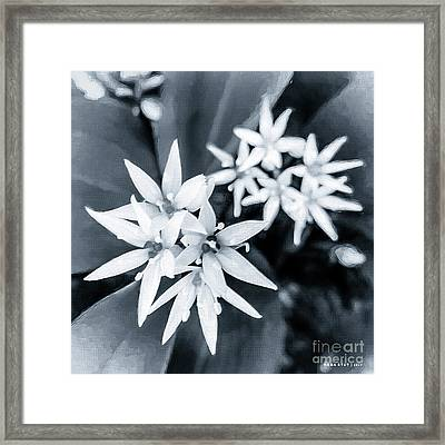 Allium Ursinum Black White Framed Print