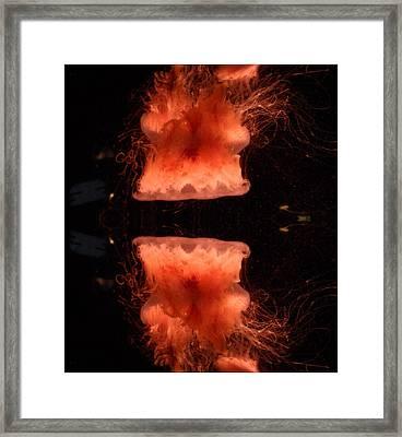 Alluring Jellyfish  Framed Print