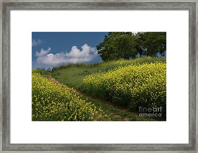 Almaden Meadows' Mustard Blossoms Framed Print