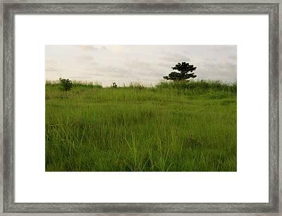 Almendron Framed Print