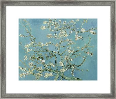 Almond Blossom Framed Print