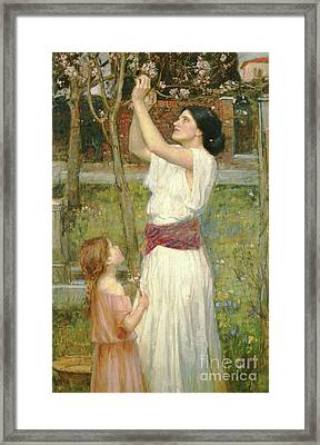 Almond Blossoms Framed Print by John William Waterhouse
