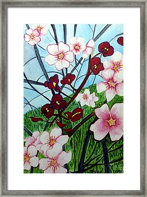 Almond Blossoms Wild Orchids In Ayn Carem Framed Print