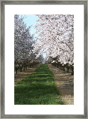 Almond Shadows Framed Print by Don Robson