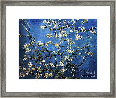 Almond Tree In Blossom Framed Print by Pg Reproductions
