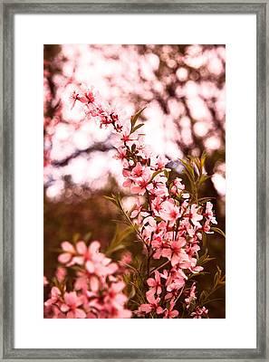 Almonds1 Framed Print