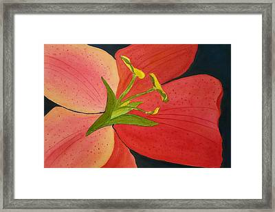 Almost A Tiger Lily Framed Print