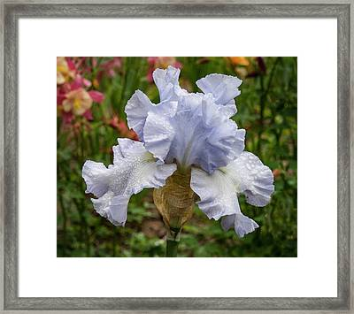 Framed Print featuring the photograph Almost Blue Bearded Iris by Jean Noren