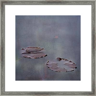 Almost Floating Framed Print by Sally Banfill