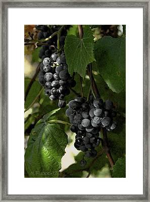 Almost Harvest Time Framed Print by Michael Flood