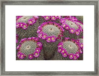 Almost Perfect Framed Print by Elvira Butler