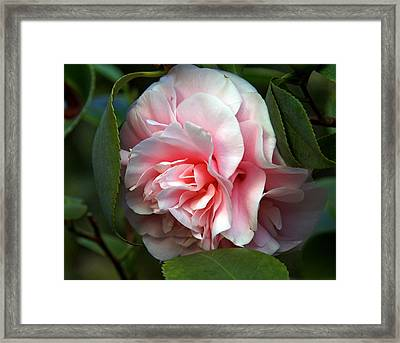 Framed Print featuring the photograph Almost Perfect by Lynda Lehmann