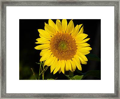 Almost Perfectly Shaped Petals Framed Print by Tina M Wenger