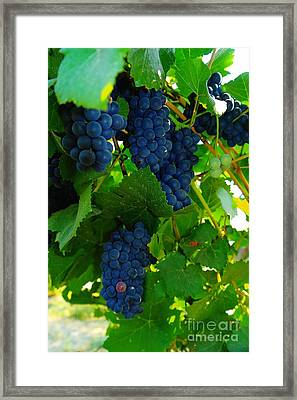 Almost Ready For Harvest  Framed Print by Jeff Swan