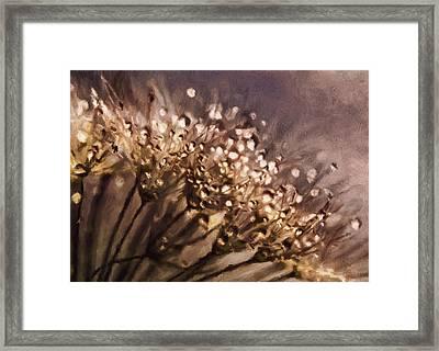 Almost Sepia Delicate Dandelions Framed Print by Georgiana Romanovna