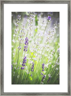 Framed Print featuring the photograph Almost Wild..... by Russell Styles